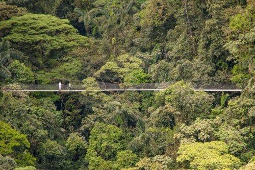 lune-miel-costa-rica-nature-pont-suspen