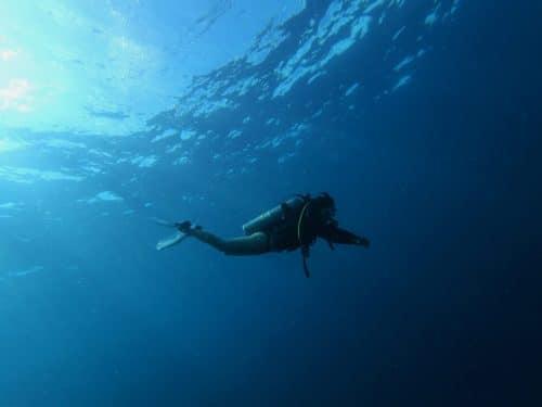 nature-sauvage-ocean-poisson