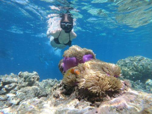 lune-miel-costa-rica-nature-sauvage-plonge