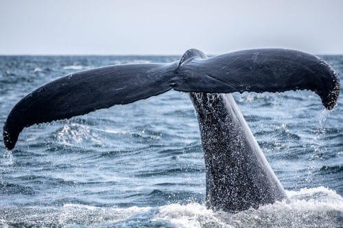 paysage-baleine-sauvage-decouverte