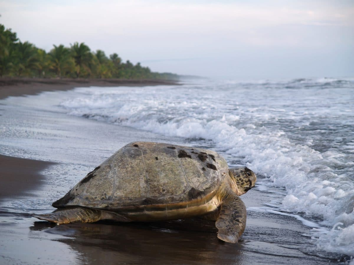 lune-miel-costa-rica-paysage-tortue